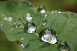 free picture raindrops-on leaf nils kristensen
