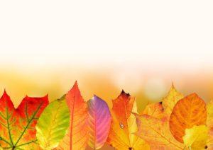 autumn-1649440_960_720