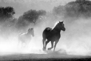 horse-430441_960_720